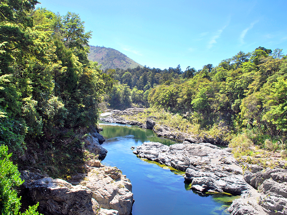 Best Kayaking Tours New Zealand Pelorus River