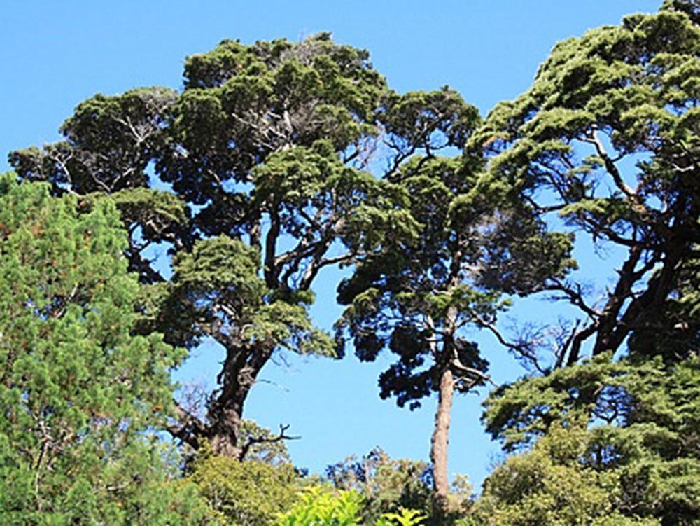 native-timber-flora-new-zealand