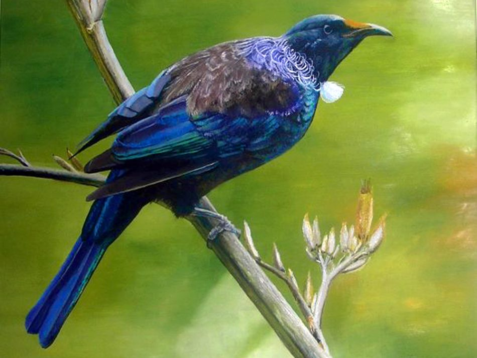 Tui Fauna New Zealand