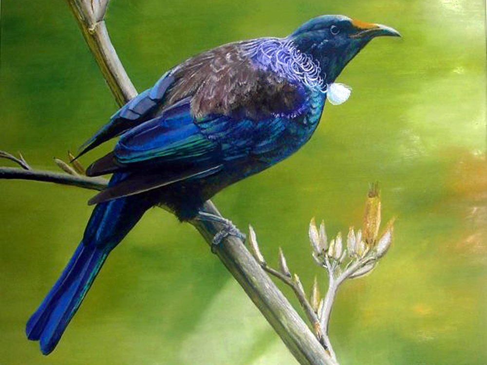 Tui Fauna New Zealand