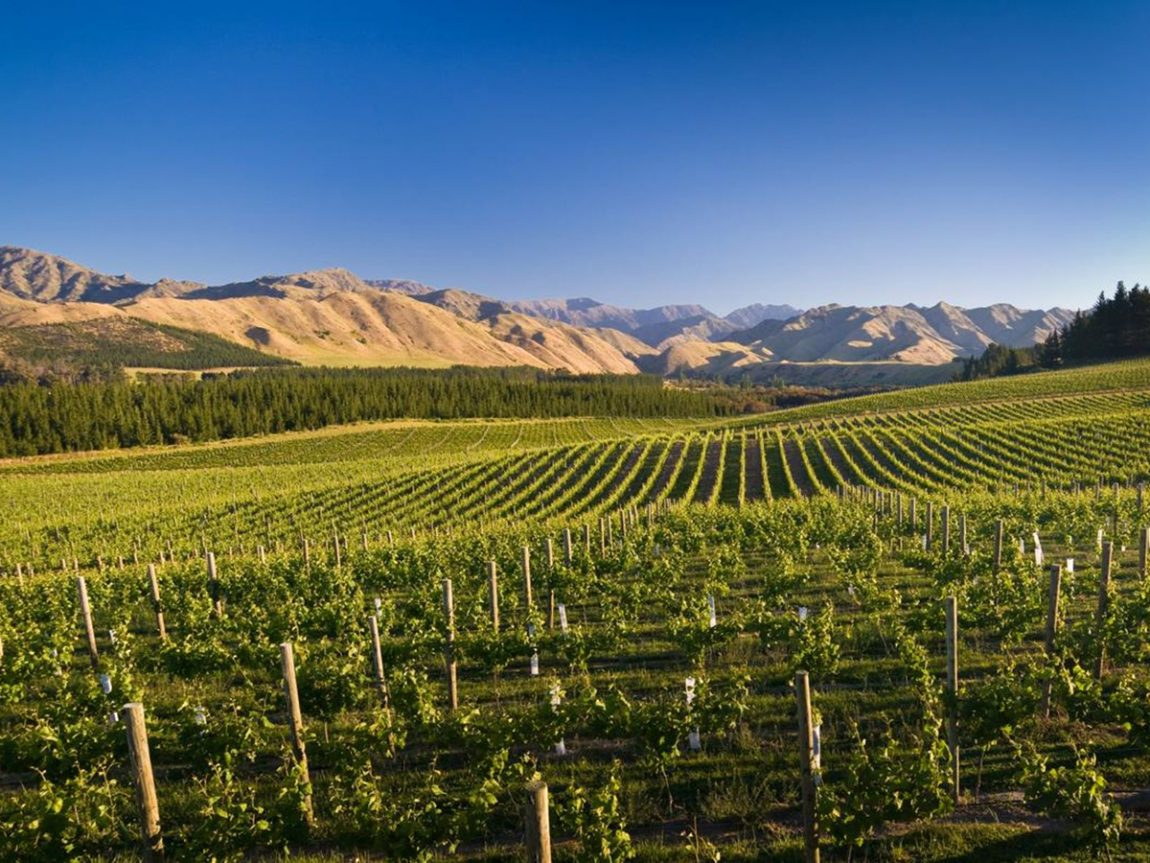 Things to do in Marlborough Marlborough Wine Tour
