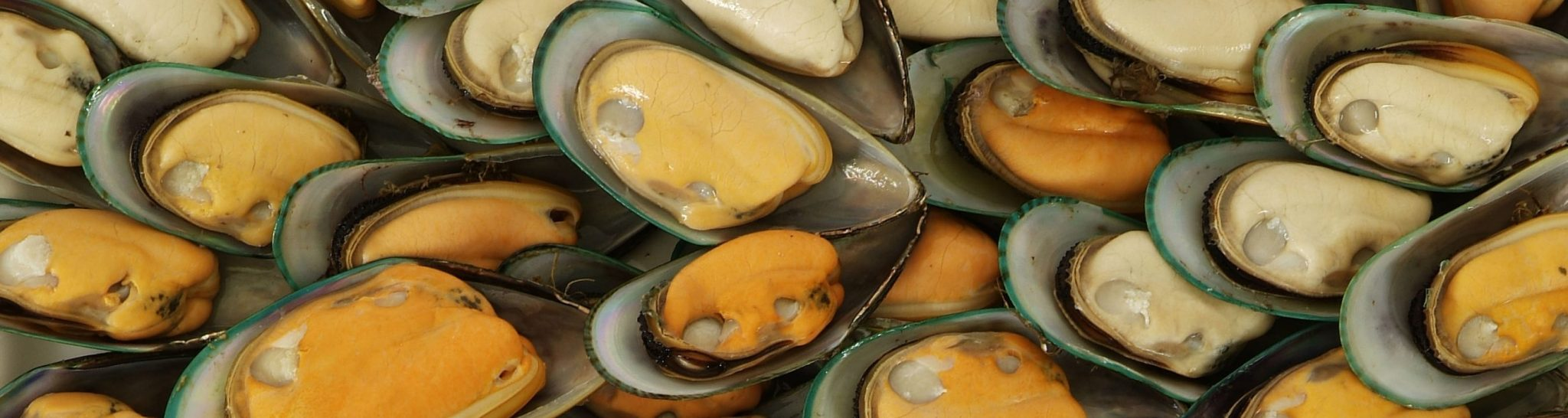 Havelock Mussel Festival Header