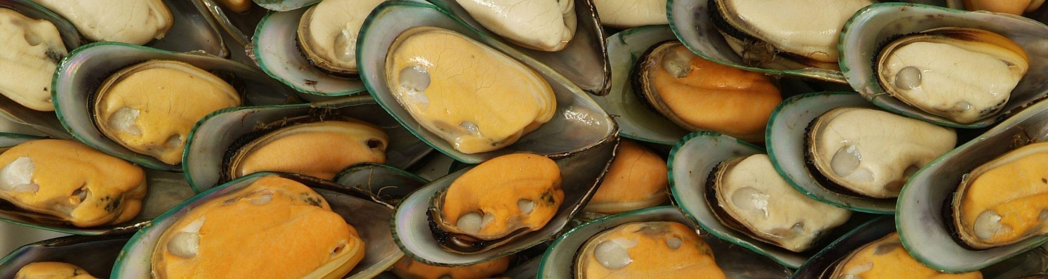 Havelock Mussel Festival Header
