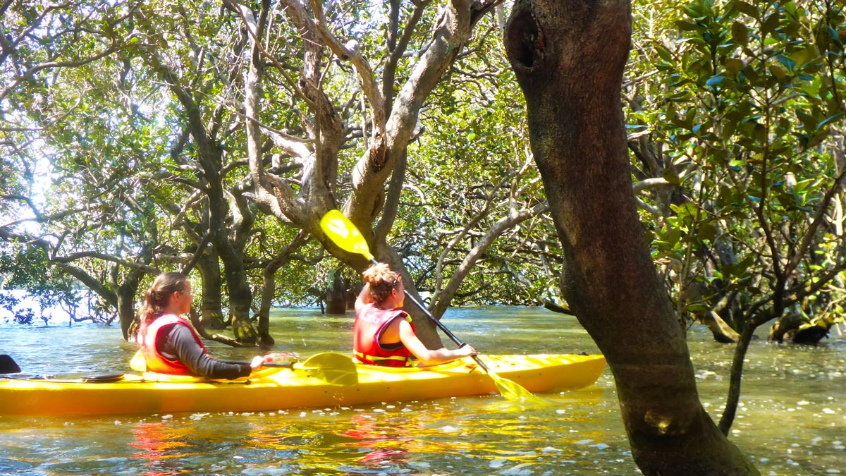 Hiddden Kayaking Gems New Zealand's North Island Lake Paihia Mangrove Forest
