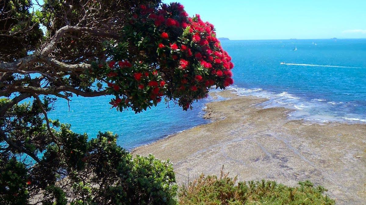 Kayak Nature Tour at Motuihe Island