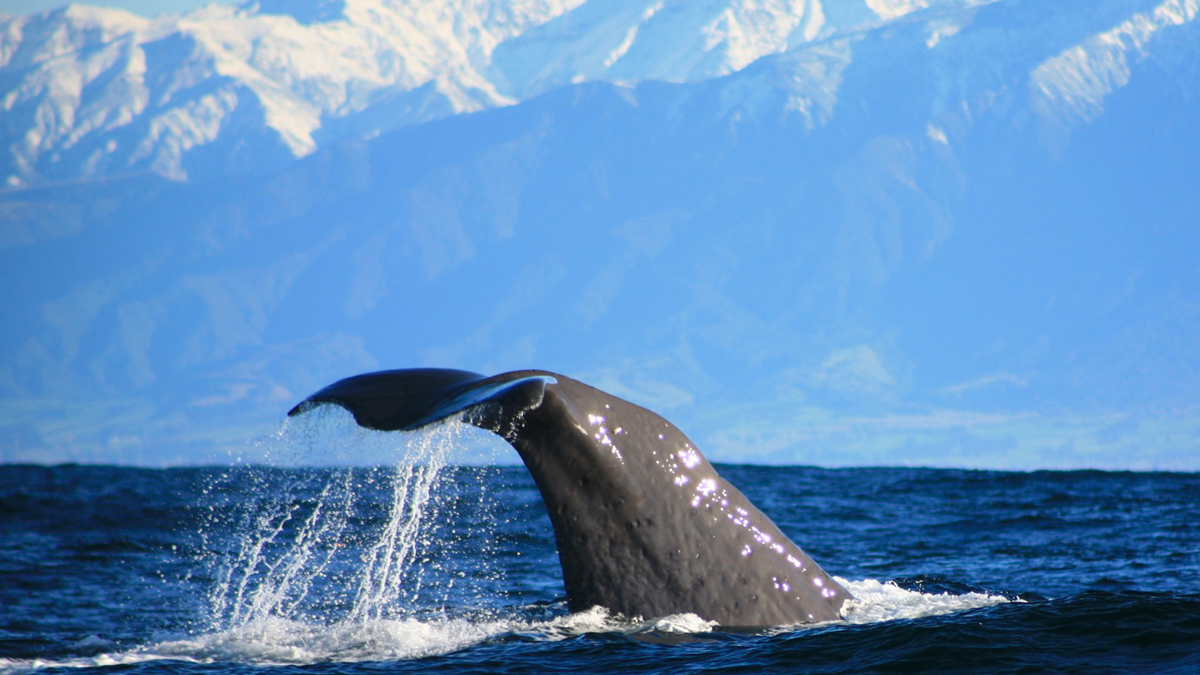 Things to do in New Zealand in Winter Wildlife