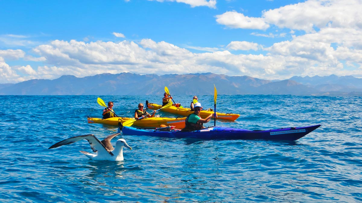 Sea Kayaking Kaikoura New Zealand