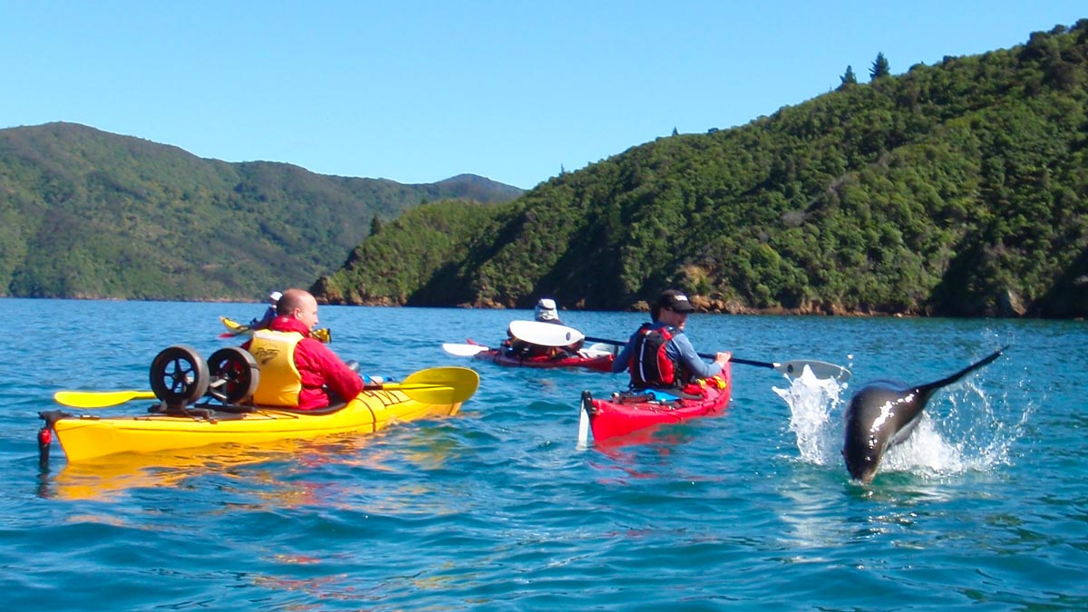 Sea Kayaking Marlborough Sounds New Zealand