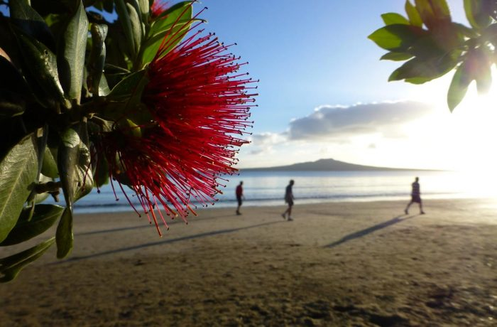What to do for Christmas in New Zealand