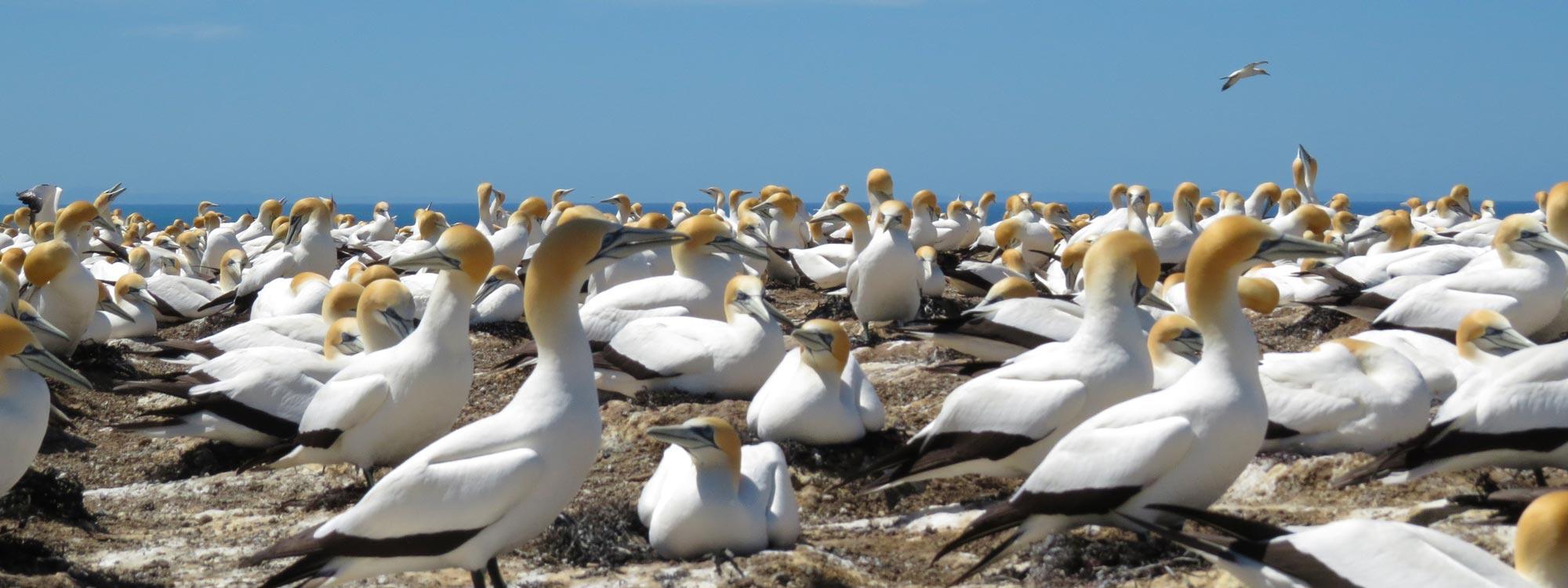 New Zealand Birds Banner