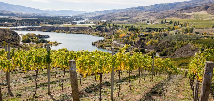 The best wine regions in New Zealand and what to do there