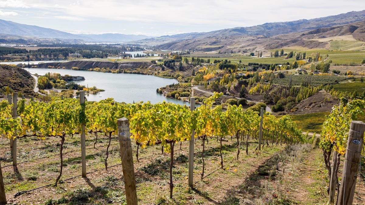 Best Wine Regions New Zealand Central Otago