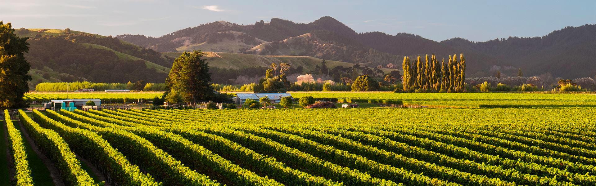 Best Wine Regions New Zealand Central Header