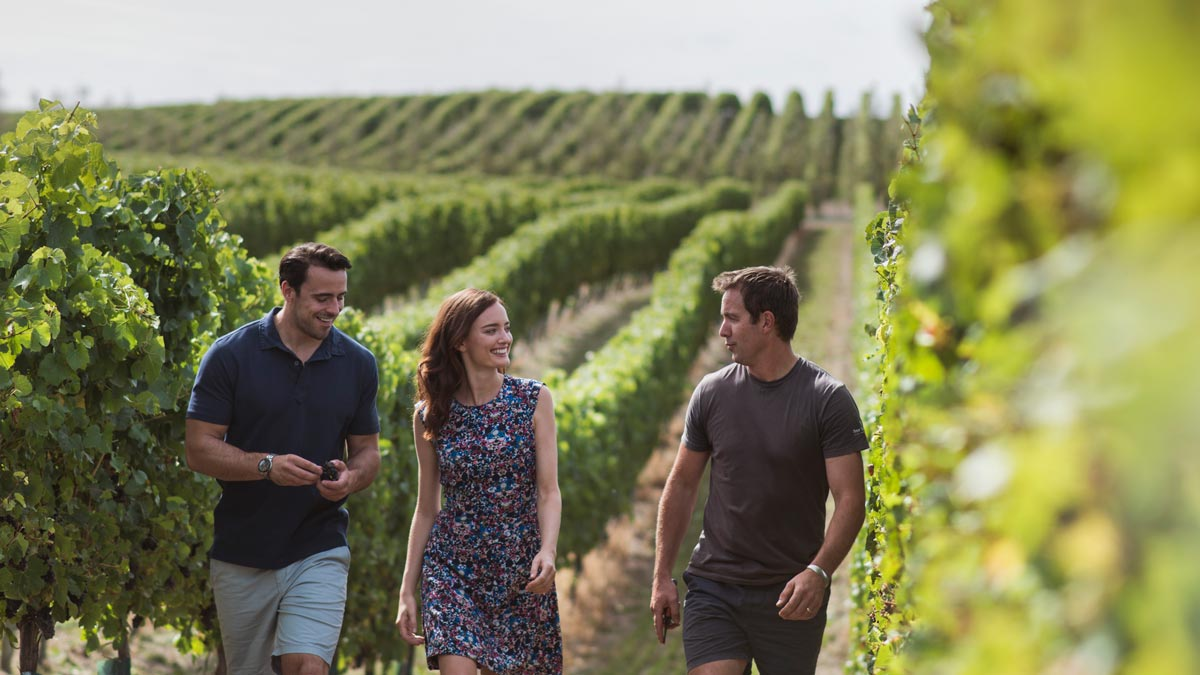 Best Wine Regions New Zealand Marlborough