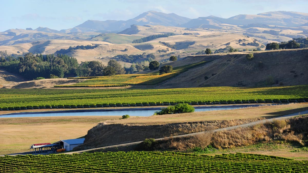 Best Wine Regions New Zealand Wairarapa