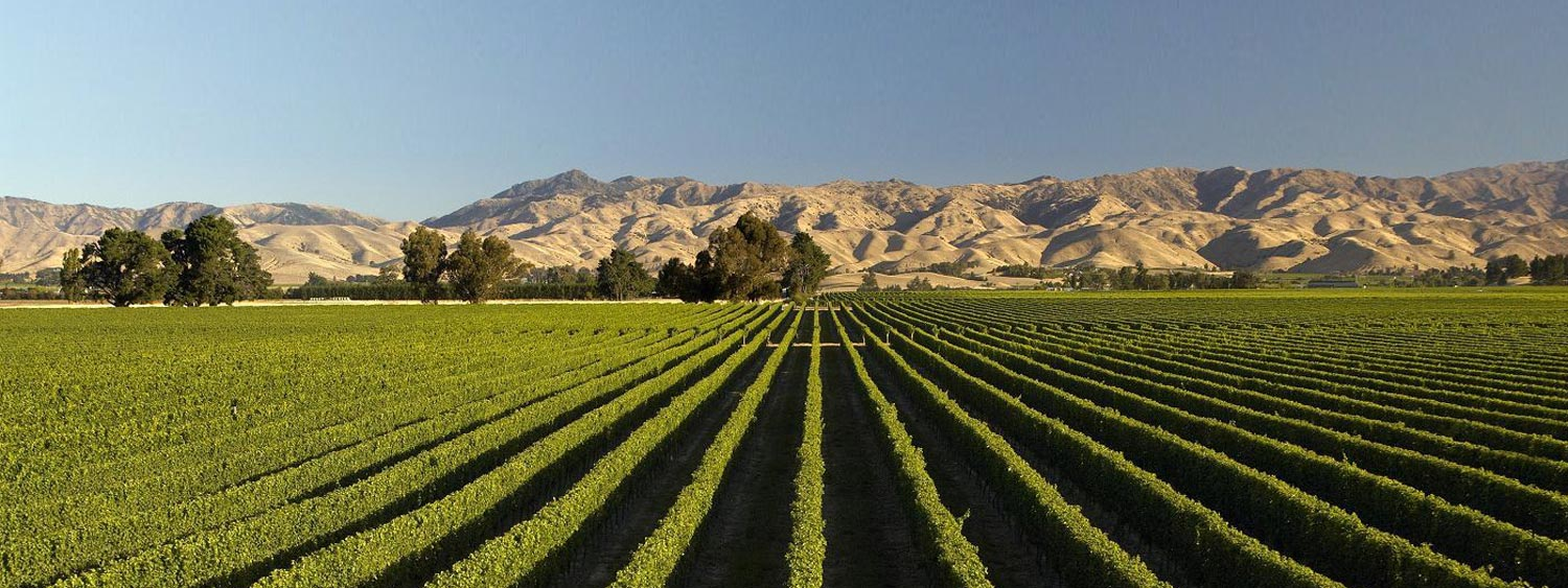 Best Marlborough Wineries in New Zealand