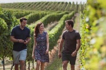 The best Marlborough wineries to visit in New Zealand